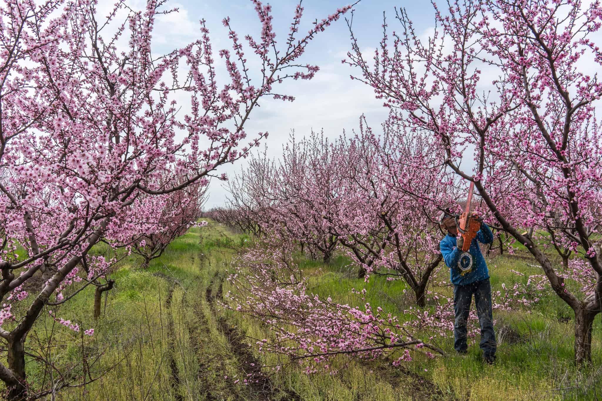 В Украине эта вода используется для полива бахчей и садов.